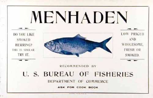 THE FOOD CHAIN: Fodder Fish | Edible East End