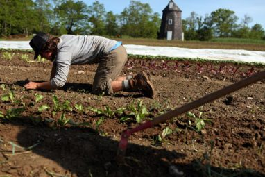 Brandon Wickes carefully places seedlings in the soil.