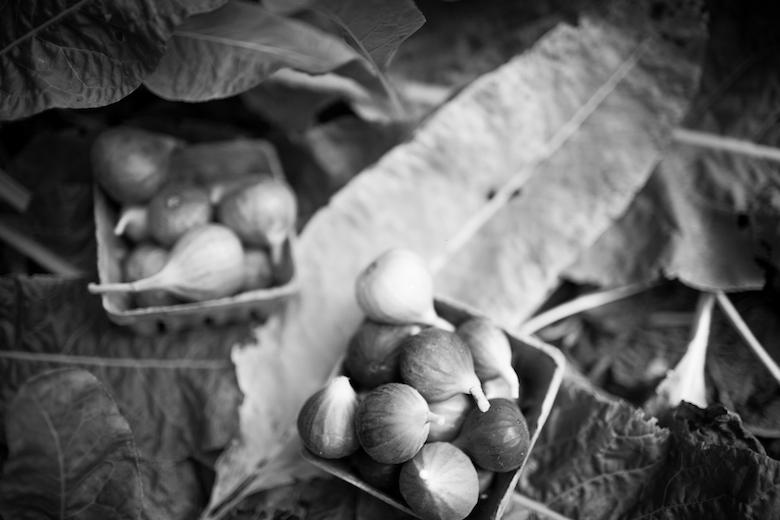Figs_OysterPondsFarm_lindsaymorris-71