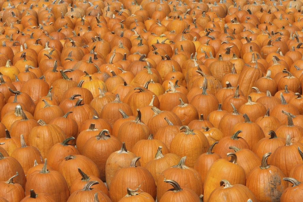 pumpkins_Greg Eichelberger