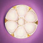 oyster-plates_18_lindsay-morris