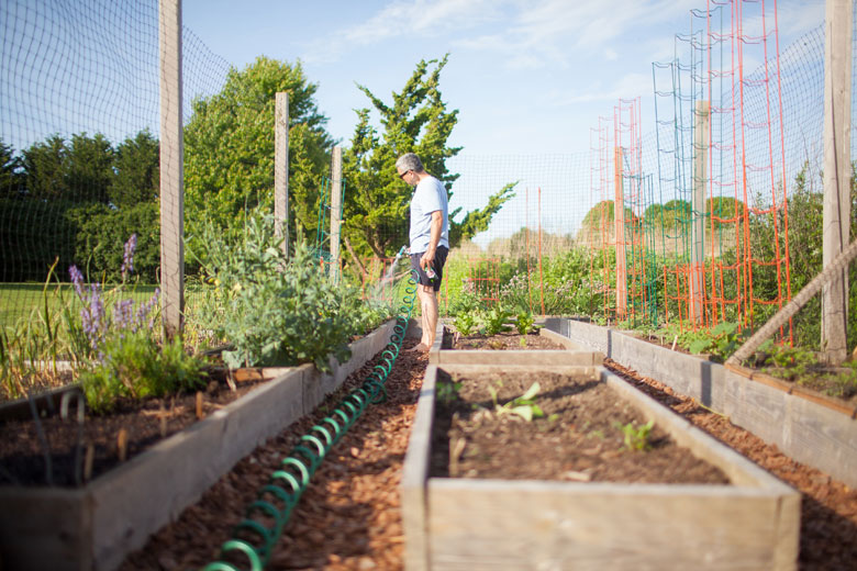 Move Over Roses, Make Room for Fennel | Edible East End