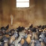 iacono-farms-20-Lindsay-Morris