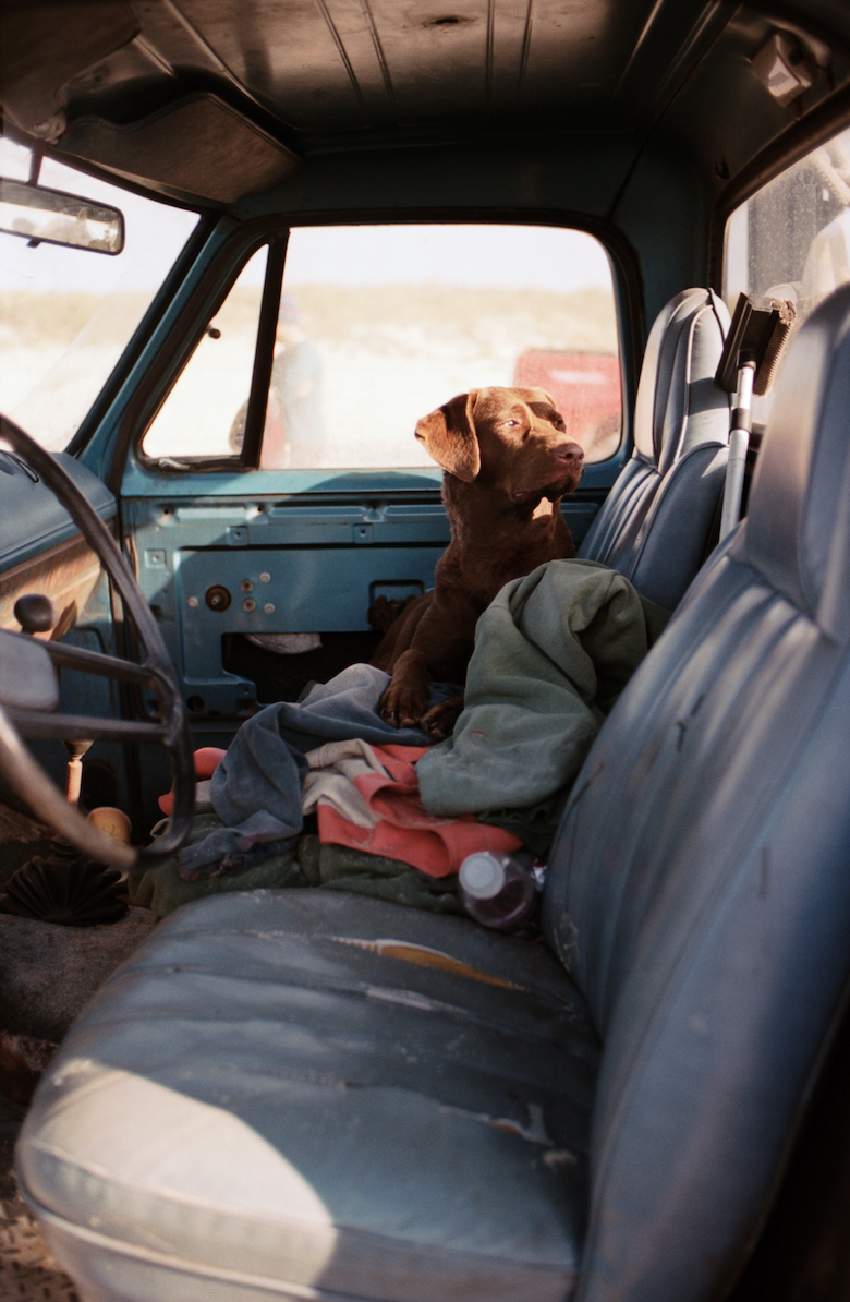 Paul Lester's dog Girl waits in the truck while the crew brings in the net. (2010)