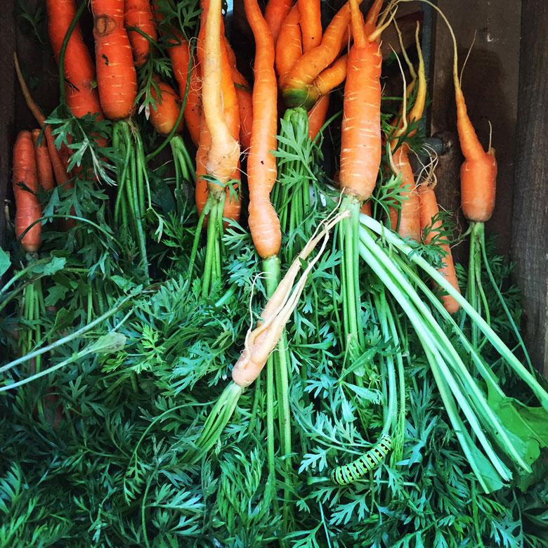 Diary of an Organic Farm Apprentice