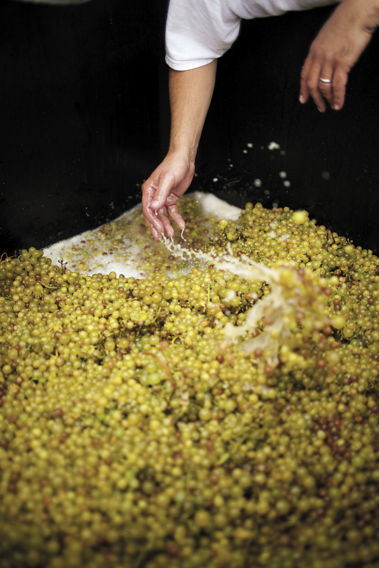 The 2015 grape harvest has begun on Long Island. Get to a winery to feel the buzz and taste some fresh juice.