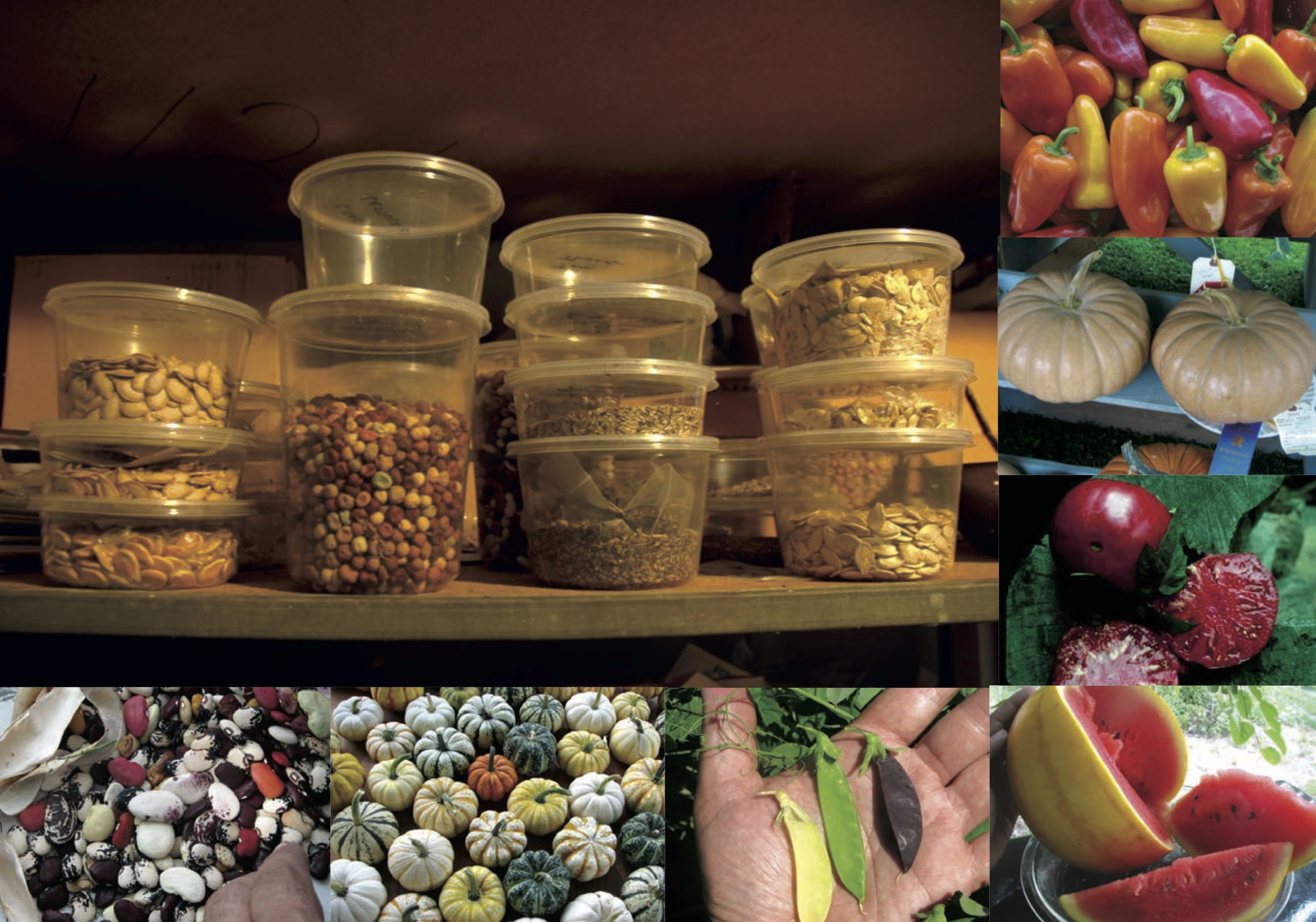Some of his holdings and creations, including deli containers of sunflower, pea, and carrot seeds; fingerling peppers; Long Island Cheese pumpkins; Brandywine tomatoes; yellow-skinned watermelon; golden and purple peas; miniature edible pumpkins; and lima beans.