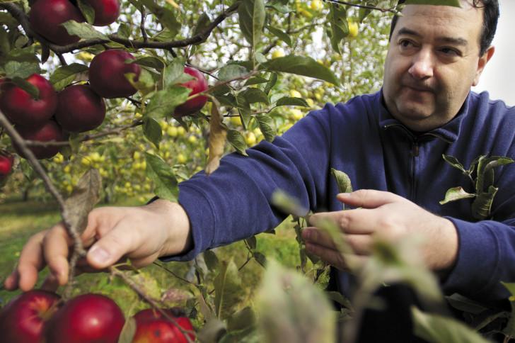 chef marco pellegrini apples