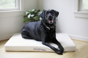 Biss dog bed
