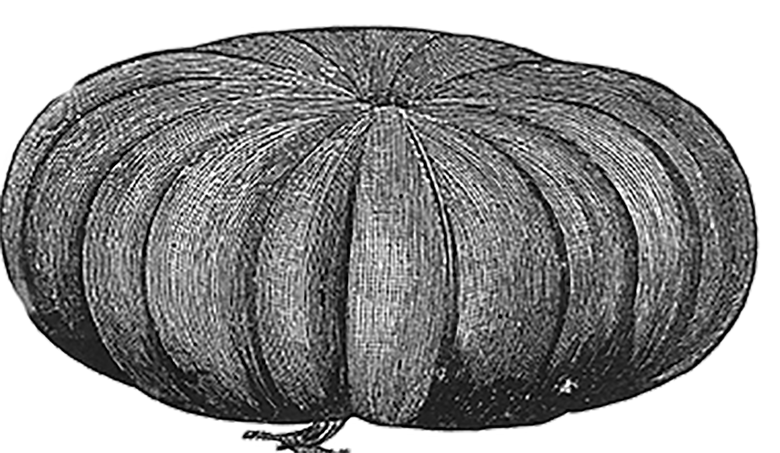 cheese pumpkin 3