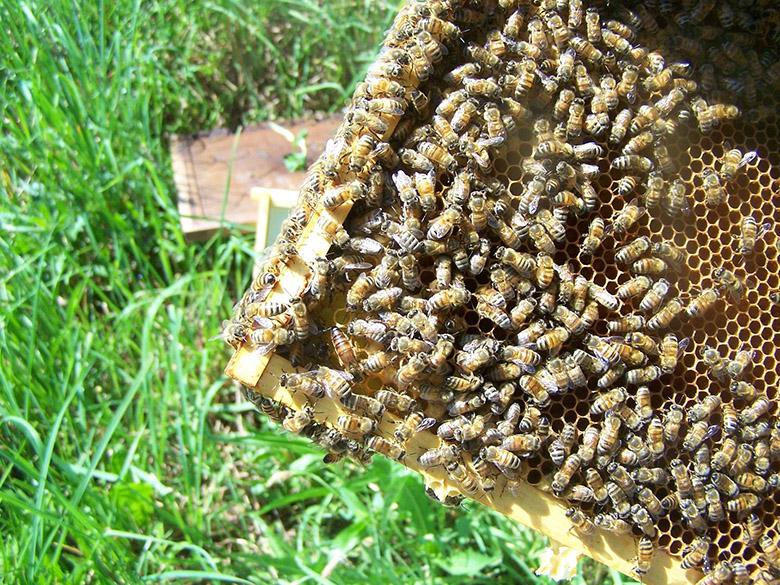 bees Chris Kelly