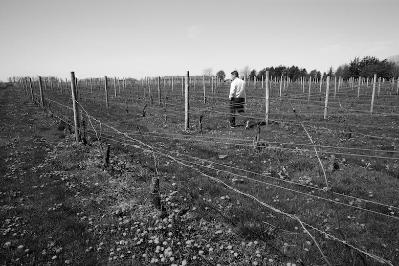 Anthony Sannino, Winemaker of Sannino Bella Vita in Peconic. 2013 SPOTLIGHT Petit Verdot.