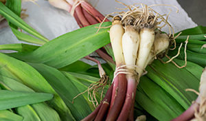 Ramps will become salsa.