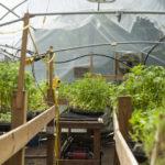 24_bhumi-farms_estefanymolina_hires