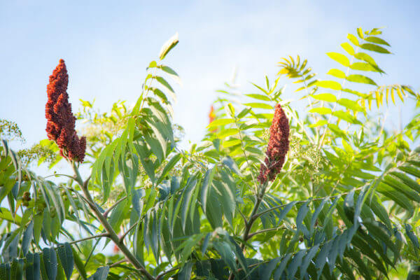 What is sumac? We're glad you asked.