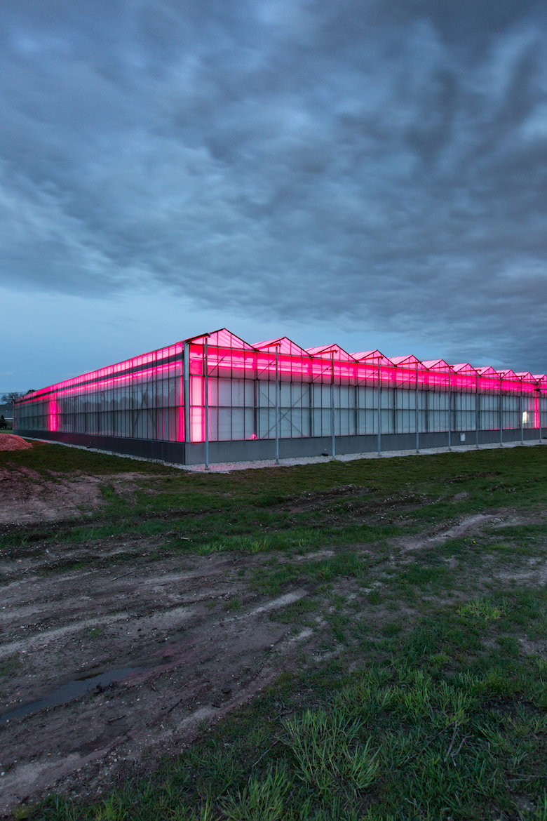 koppert cress greenhouse in riverhead