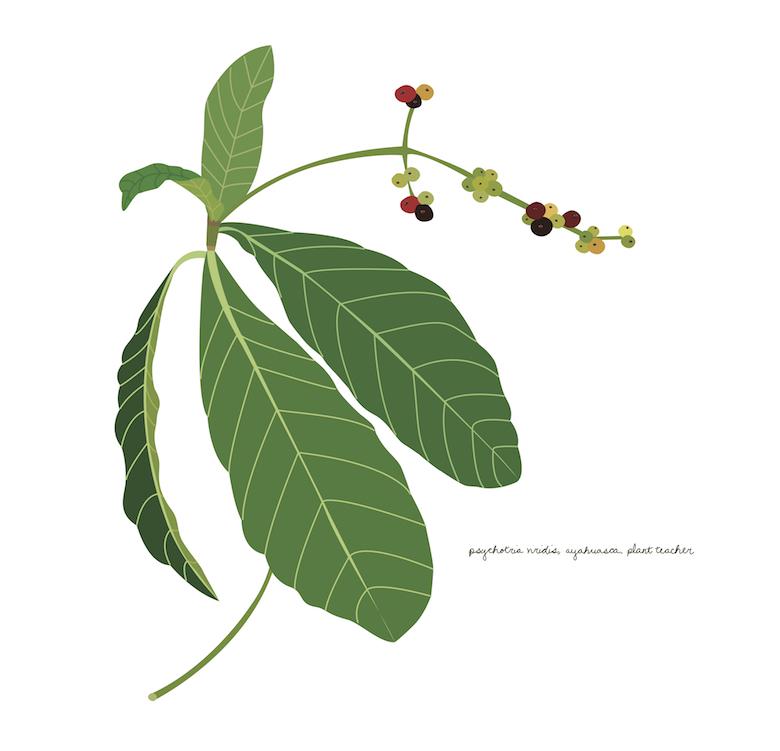 ayahuasca flower